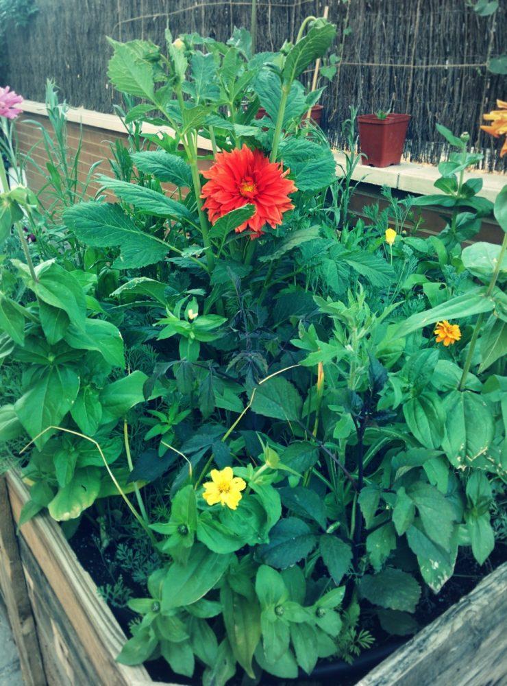 Jardines baratos y bonitos imagenes de jardines caseros - Como hacer un jardin bonito y barato ...