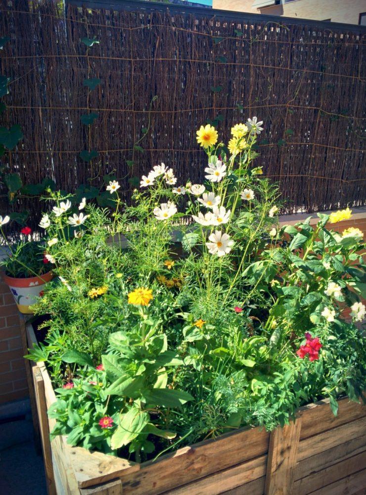 Como hacer un jardin bonito y barato great diseo de for Jardines bonitos y baratos