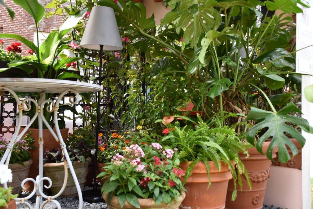Marta Puig un balcón con muchas flores